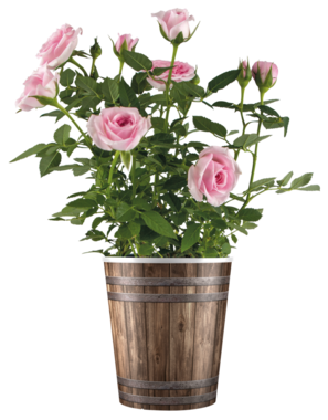 Wooden Bucket plastic pot